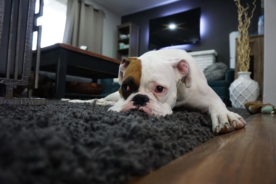 úklid koberec